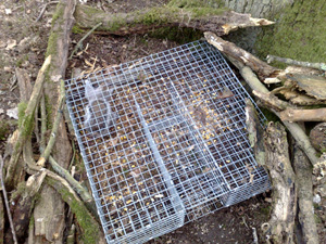 Grey Squirrel Control Actively Promoting The Humane Culling Of Grey