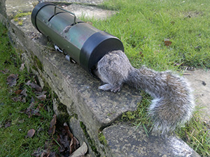 squirrel trap plans search results million gallery